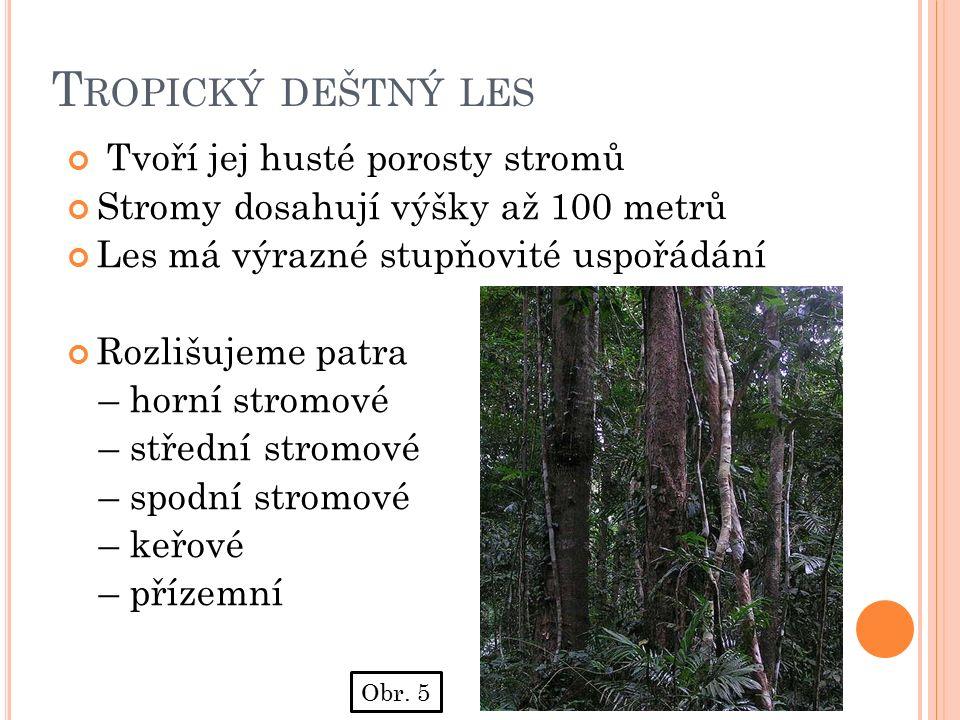T ROPICKÝ DEŠTNÝ LES Tvoří jej husté porosty stromů Stromy dosahují výšky až 100 metrů Les má výrazné stupňovité uspořádání Rozlišujeme patra – horní stromové – střední stromové – spodní stromové – keřové – přízemní Obr.