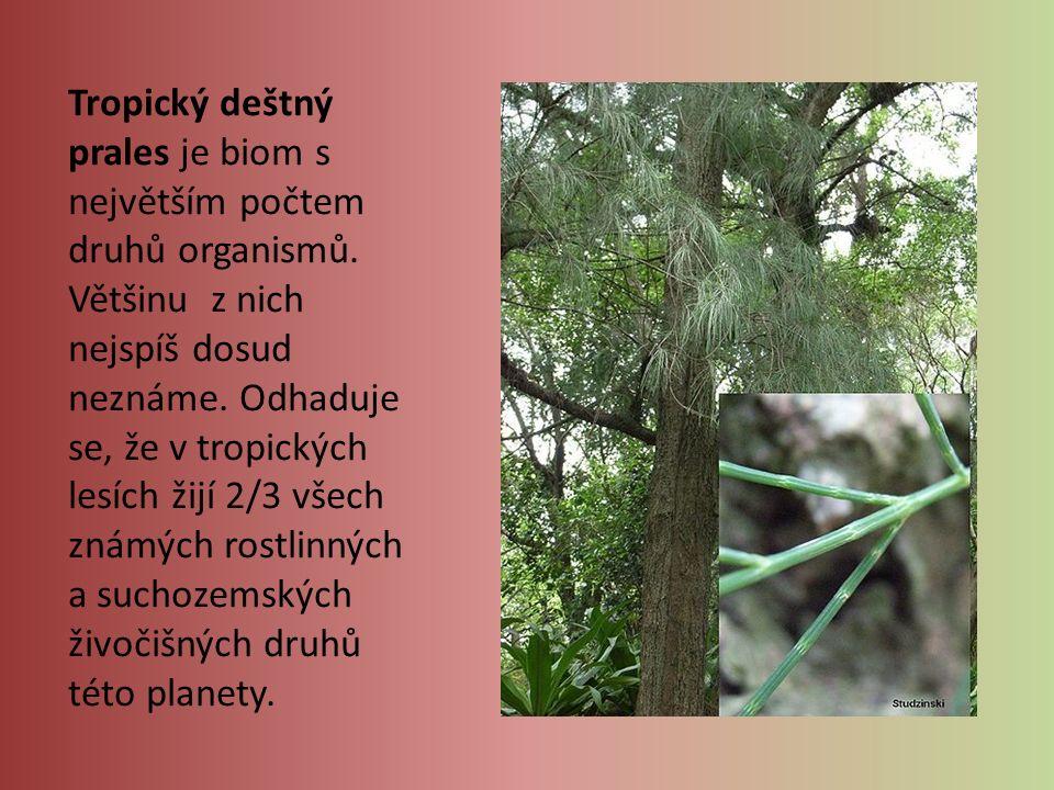 Tropický deštný prales je biom s největším počtem druhů organismů. Většinu z nich nejspíš dosud neznáme. Odhaduje se, že v tropických lesích žijí 2/3