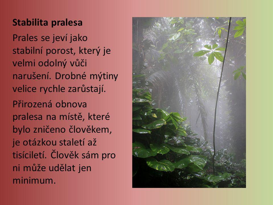 Stabilita pralesa Prales se jeví jako stabilní porost, který je velmi odolný vůči narušení.