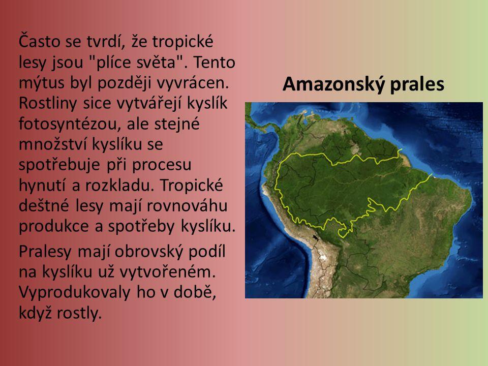 Často se tvrdí, že tropické lesy jsou plíce světa .