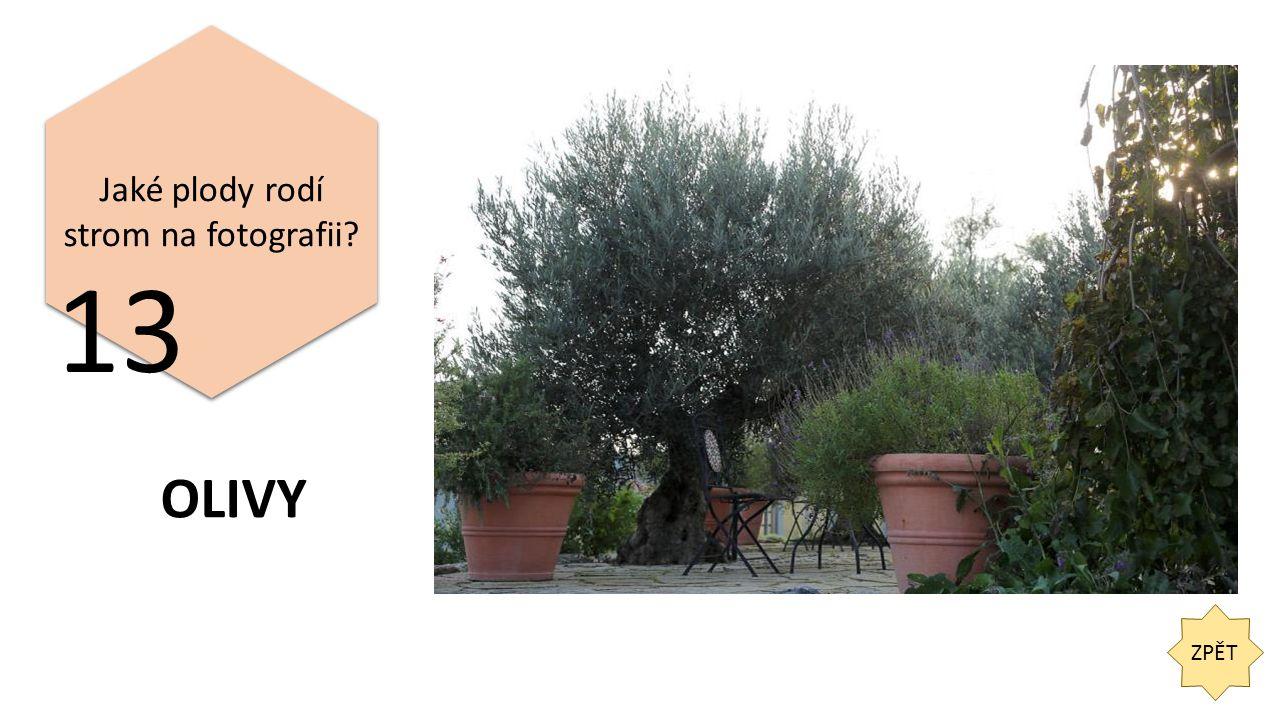 ZPĚT 13 Jaké plody rodí strom na fotografii OLIVY
