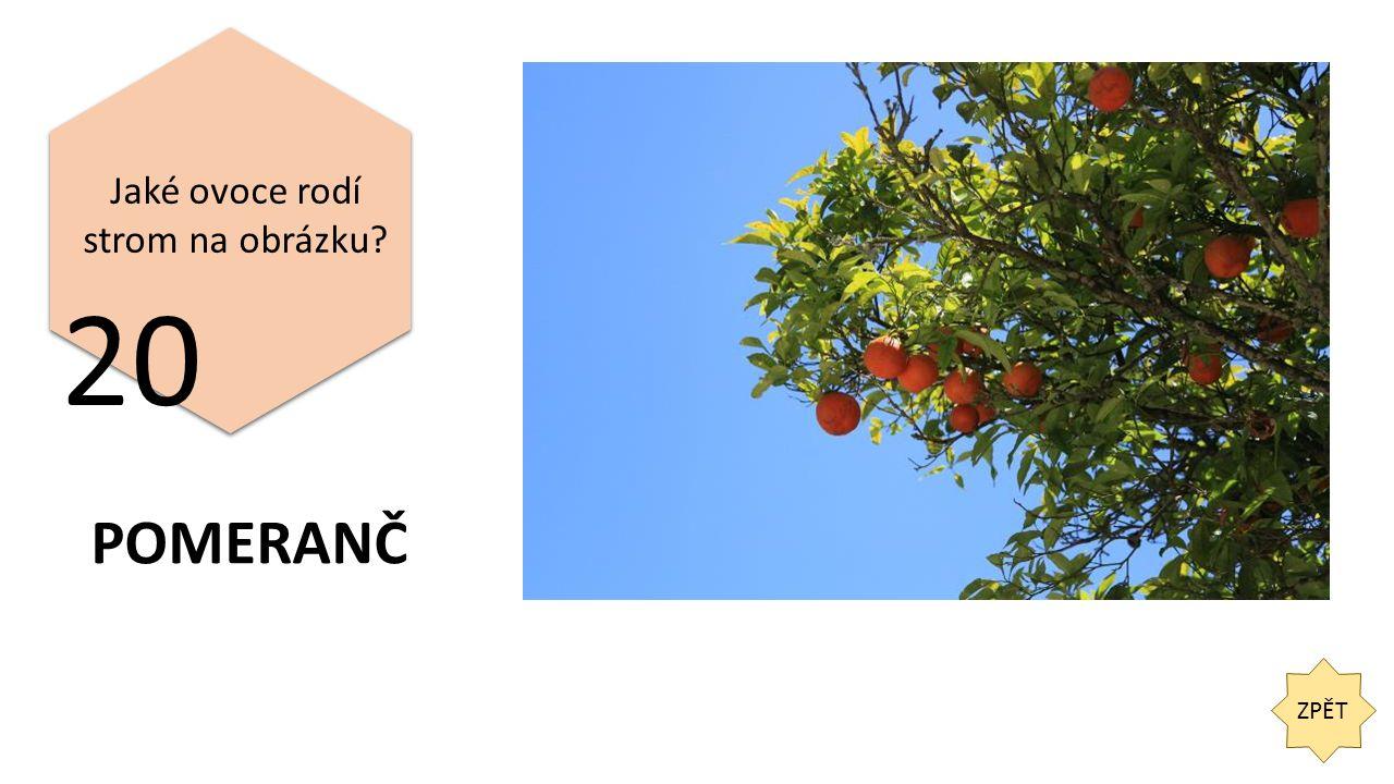 ZPĚT 20 Jaké ovoce rodí strom na obrázku POMERANČ