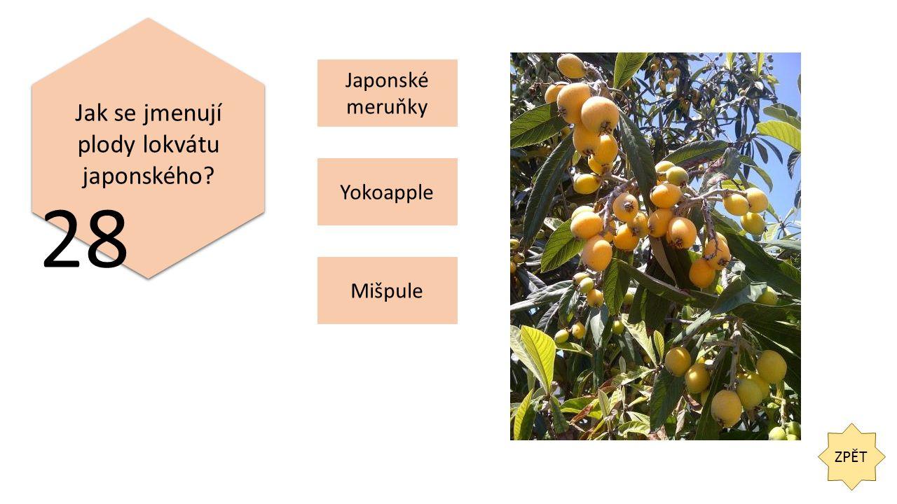 ZPĚT 28 Jak se jmenují plody lokvátu japonského Japonské meruňky Yokoapple Mišpule