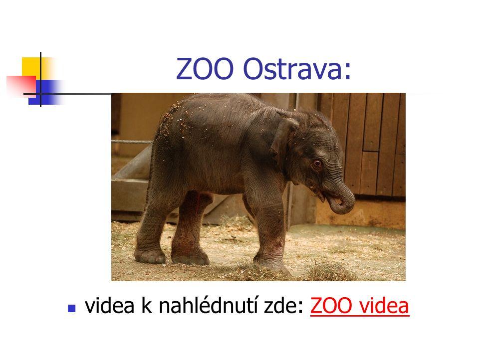ZOO Ostrava: videa k nahlédnutí zde: ZOO videaZOO videa