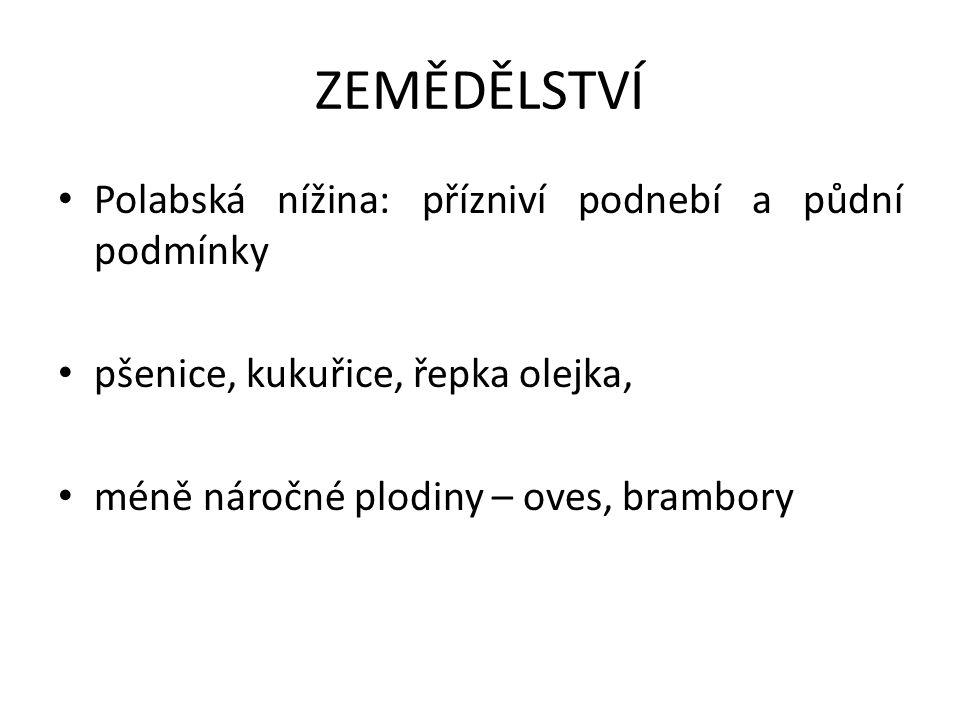 ZEMĚDĚLSTVÍ Polabská nížina: přízniví podnebí a půdní podmínky pšenice, kukuřice, řepka olejka, méně náročné plodiny – oves, brambory