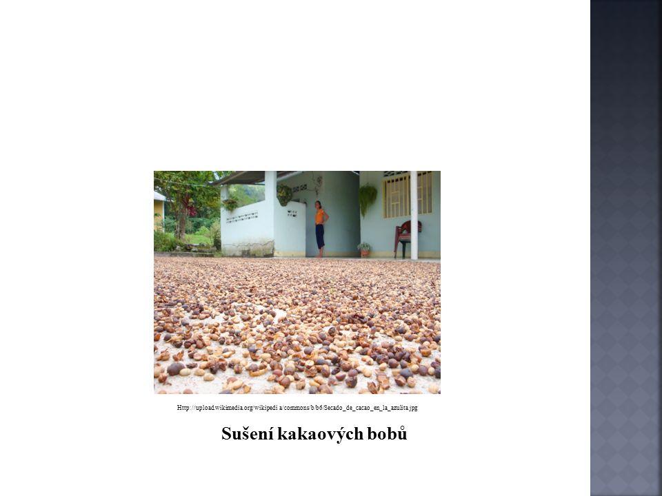 http://www.ssss.cz/files/ucebnice_3lete_obory/pv/1/kakao.htm o Po fermentaci následuje sušení bobů o Při sušení boby ztrácí vlhkost asi o 50% o Suchá zrna se přebírají a čistí na speciálních strojích
