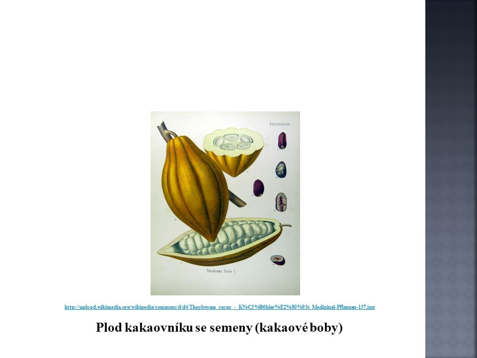 http://upload.wikimedia.org/wikipedia/commons/d/d4/Theobroma_cacao_-_K%C3%B6hler%E2%80%93s_Medizinal-Pflanzen-137.jpg Plod kakaovníku se semeny (kakaové boby)