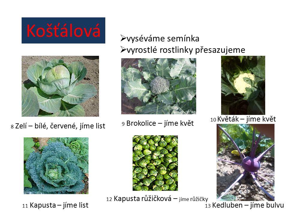 Košťálová  vyséváme semínka  vyrostlé rostlinky přesazujeme 8 Zelí – bílé, červené, jíme list 9 Brokolice – jíme květ 10 Květák – jíme květ 11 Kapusta – jíme list 13 Kedluben – jíme bulvu 12 Kapusta růžičková – jíme růžičky
