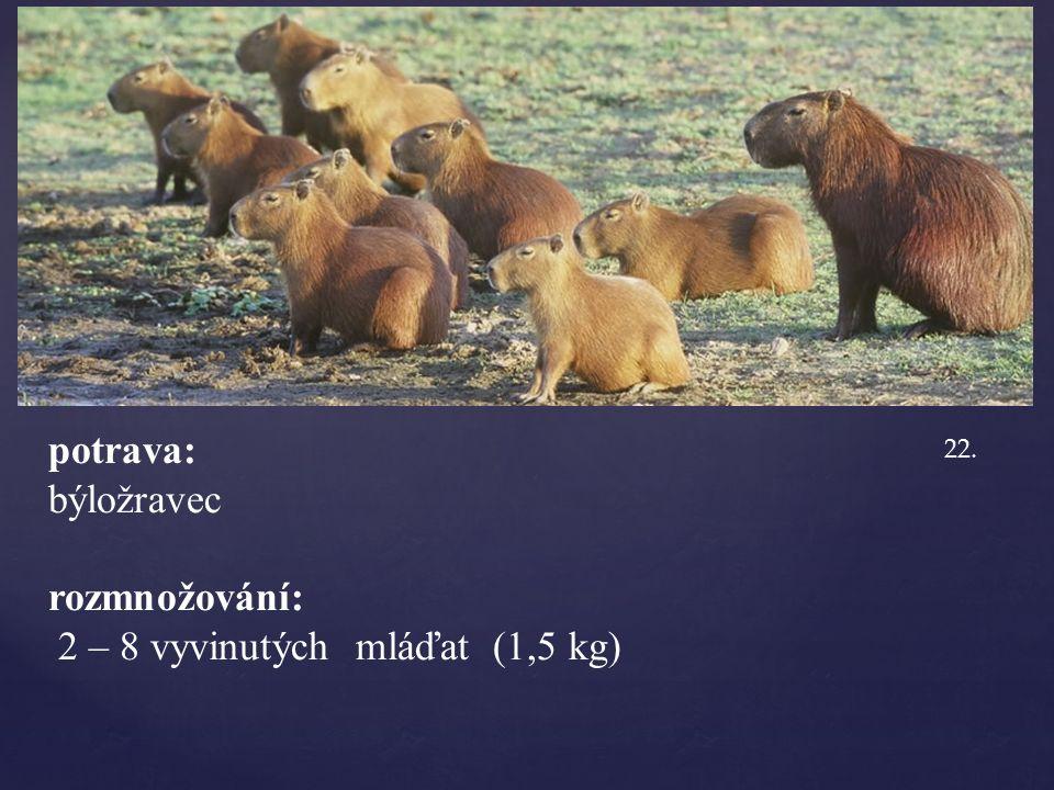 potrava: býložravec rozmnožování: 2 – 8 vyvinutých mláďat (1,5 kg) 22.