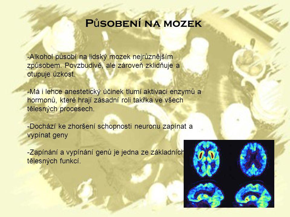 -Alkohol působí na lidský mozek nejrůznějším způsobem.
