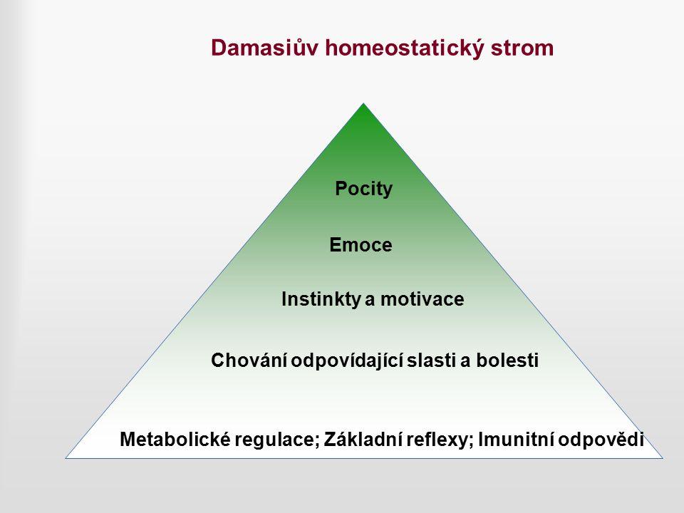 Damasiův homeostatický strom Metabolické regulace; Základní reflexy; Imunitní odpovědi Chování odpovídající slasti a bolesti Instinkty a motivace Emoce Pocity