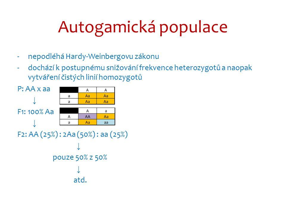 Autogamická populace -nepodléhá Hardy-Weinbergovu zákonu -dochází k postupnému snižování frekvence heterozygotů a naopak vytváření čistých linií homozygotů P: AA x aa ↓ F1: 100% Aa ↓ F2: AA (25%) : 2Aa (50%) : aa (25%) ↓ pouze 50% z 50% ↓ atd.
