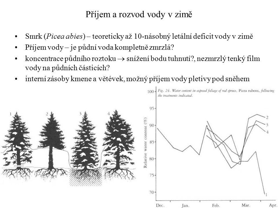 Příjem a rozvod vody v zimě Smrk (Picea abies) – teoreticky až 10-násobný letální deficit vody v zimě Příjem vody – je půdní voda kompletně zmrzlá.