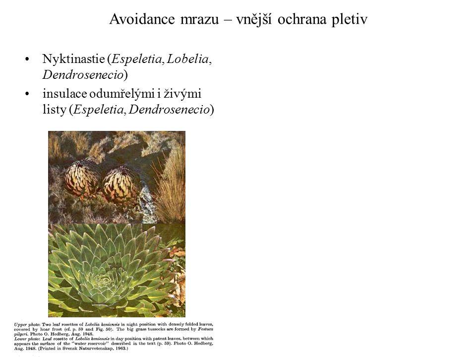 Avoidance mrazu – vnější ochrana pletiv Nyktinastie (Espeletia, Lobelia, Dendrosenecio) insulace odumřelými i živými listy (Espeletia, Dendrosenecio)