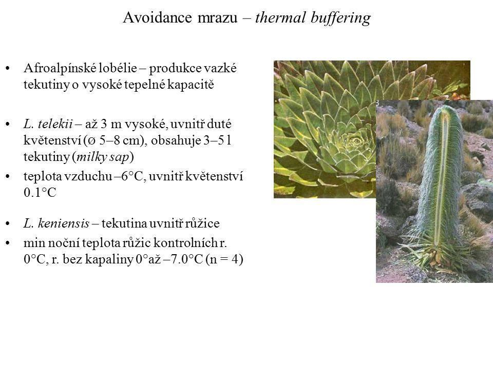 Avoidance mrazu – thermal buffering Afroalpínské lobélie – produkce vazké tekutiny o vysoké tepelné kapacitě L.