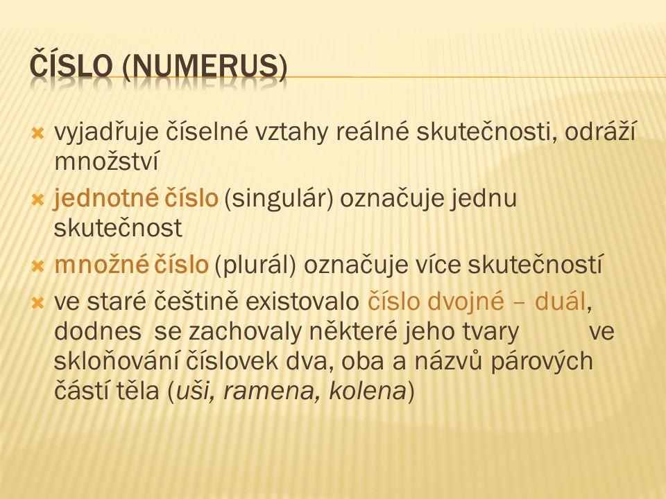 mluvnické číslo není totožné se skutečným počtem:  jména pomnožná – mají tvar čísla množného, ale označují pouze jednu věc (např.