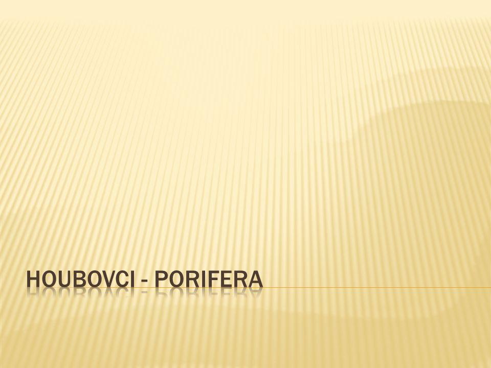 NÁZEV ŠKOLY : Gymnázium Lovosice, Sady pionýrů 600/6 ČÍSLO PROJEKTU : CZ.1.07/1.5.00/34.1073 NÁZEV MATERIÁLU : VY_32_INOVACE_7A_10_TEMA Houbovci TÉMA SADY : Biologie pro 1.