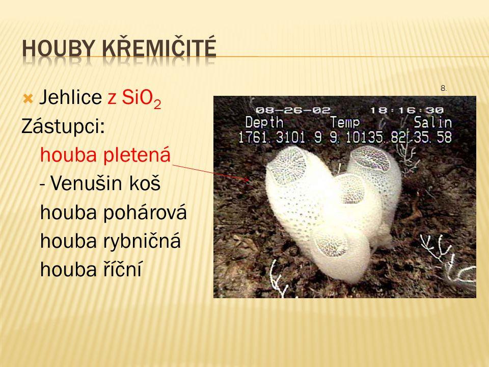  Jehlice z SiO 2 Zástupci: houba pletená - Venušin koš houba pohárová houba rybničná houba říční 8.
