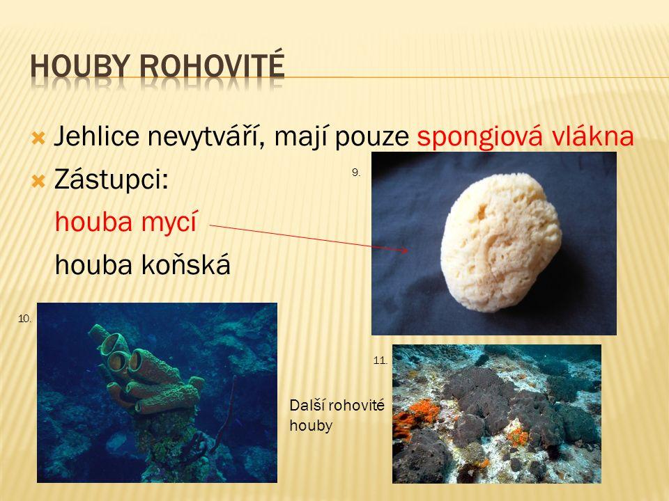  Jehlice nevytváří, mají pouze spongiová vlákna  Zástupci: houba mycí houba koňská 9. 10. 11. Další rohovité houby
