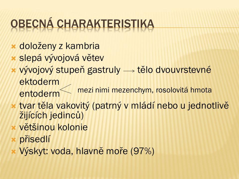 1.Archiv autora 2. KARAKAL. wikipedia [online]. [cit.