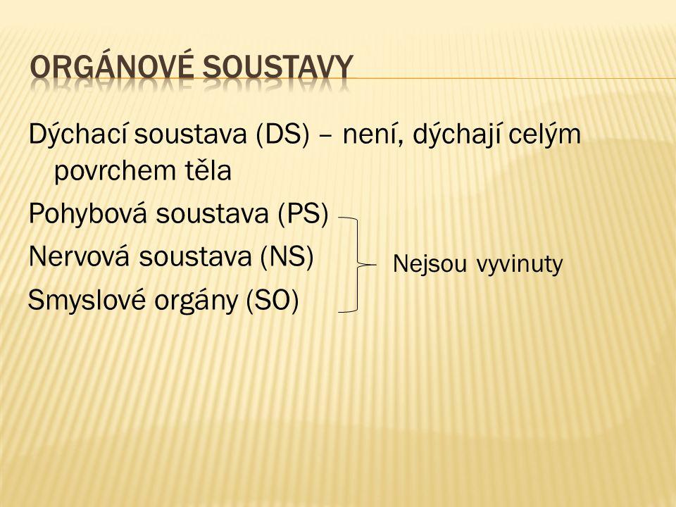 Dýchací soustava (DS) – není, dýchají celým povrchem těla Pohybová soustava (PS) Nervová soustava (NS) Smyslové orgány (SO) Nejsou vyvinuty