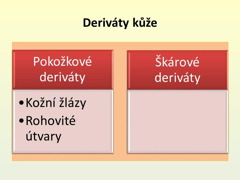 Deriváty kůže Pokožkové deriváty Kožní žlázy Rohovité útvary Škárové deriváty
