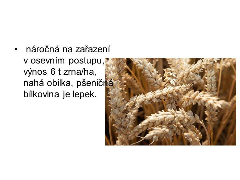 náročná na zařazení v osevním postupu, výnos 6 t zrna/ha, nahá obilka, pšeničná bílkovina je lepek.