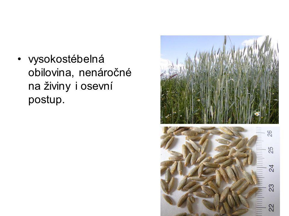 cukernatost – 18-20 %, výnos bulev 40 t/ha, cukrovarnické řízky se používají na krmivo, dieteticky dobrá je melasa.