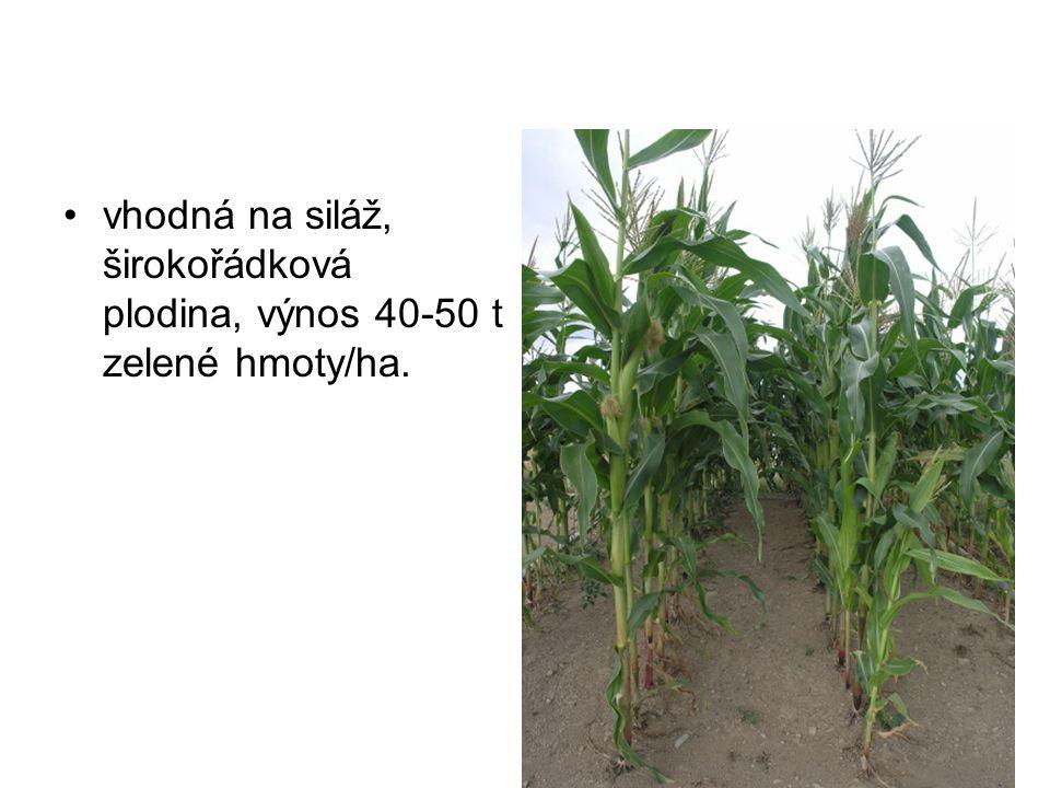 vhodná na siláž, širokořádková plodina, výnos 40-50 t zelené hmoty/ha.