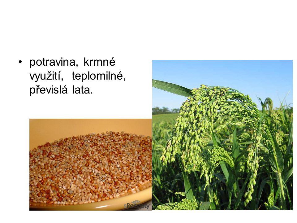 potravina, krmné využití, teplomilné, převislá lata.