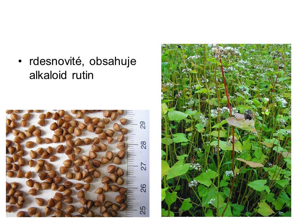 rdesnovité, obsahuje alkaloid rutin