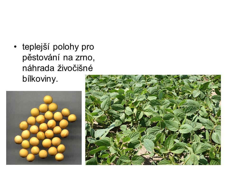 teplejší polohy pro pěstování na zrno, náhrada živočišné bílkoviny.