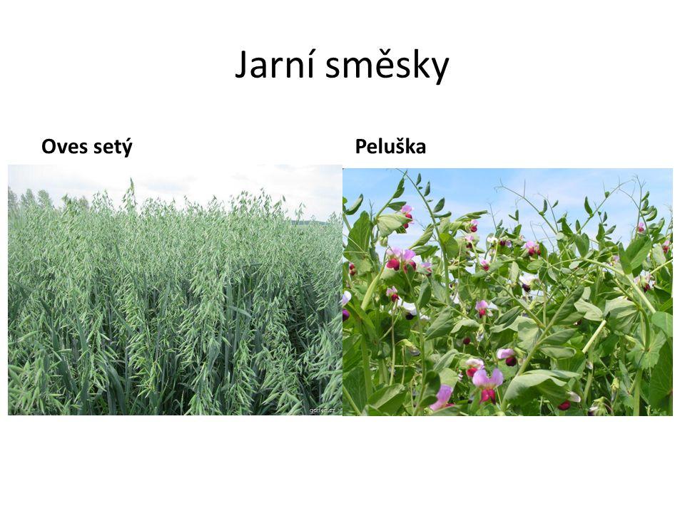 Jarní směsky Oves setýPeluška