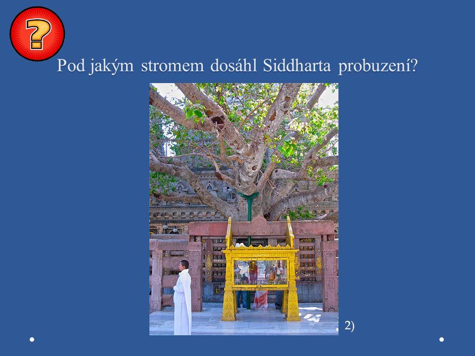 Pod jakým stromem dosáhl Siddharta probuzení? 2)