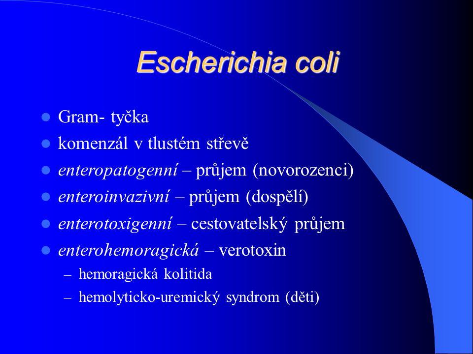 Escherichia coli Gram- tyčka komenzál v tlustém střevě enteropatogenní – průjem (novorozenci) enteroinvazivní – průjem (dospělí) enterotoxigenní – cestovatelský průjem enterohemoragická – verotoxin – hemoragická kolitida – hemolyticko-uremický syndrom (děti)