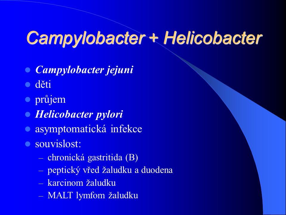 Campylobacter + Helicobacter Campylobacter jejuni děti průjem Helicobacter pylori asymptomatická infekce souvislost: – chronická gastritida (B) – peptický vřed žaludku a duodena – karcinom žaludku – MALT lymfom žaludku