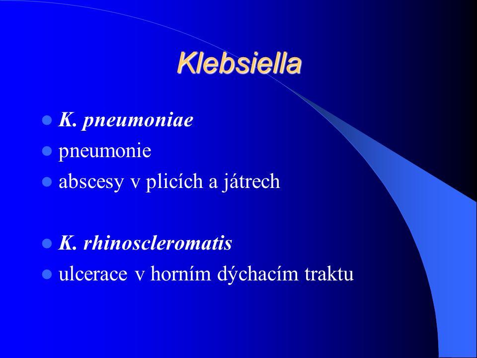 Klebsiella K. pneumoniae pneumonie abscesy v plicích a játrech K.