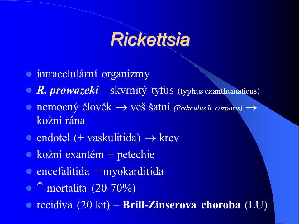 Rickettsia intracelulární organizmy R.