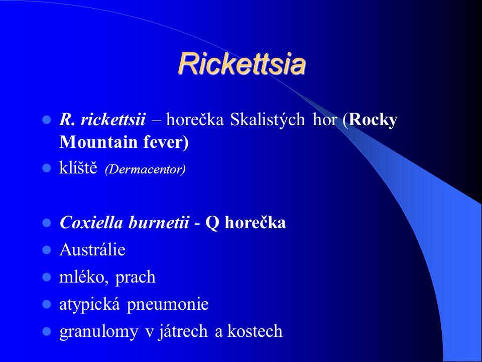 Rickettsia R.