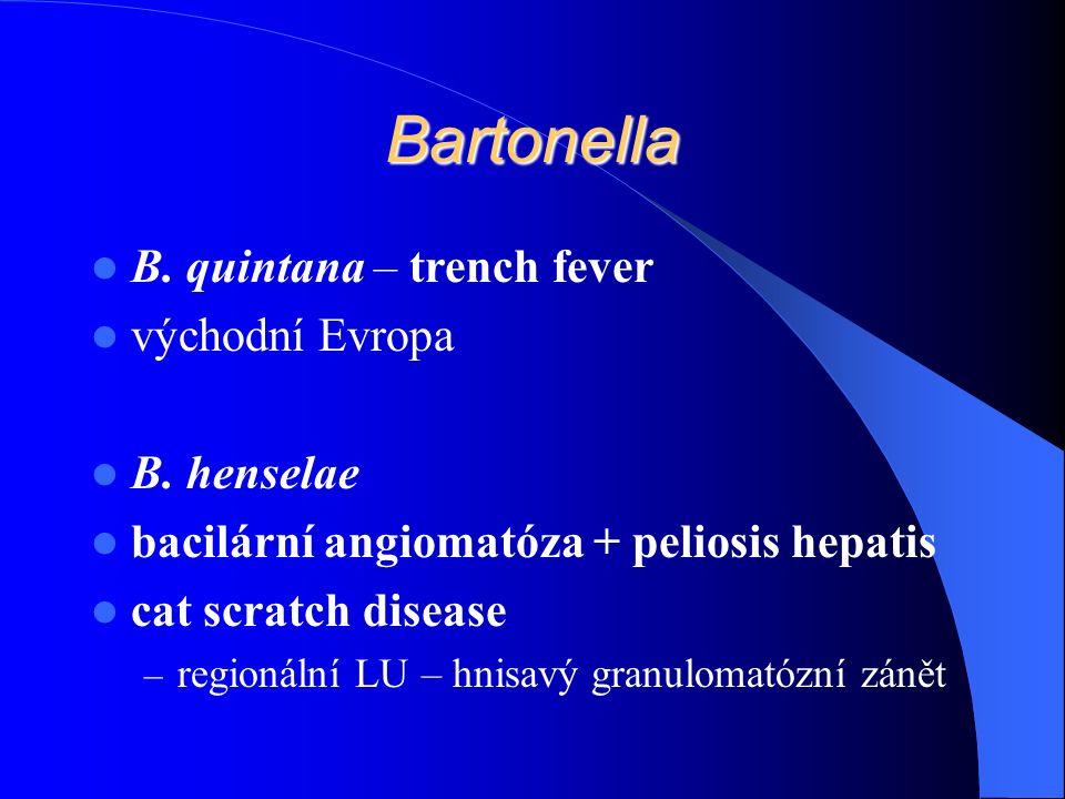 Bartonella B. quintana – trench fever východní Evropa B.