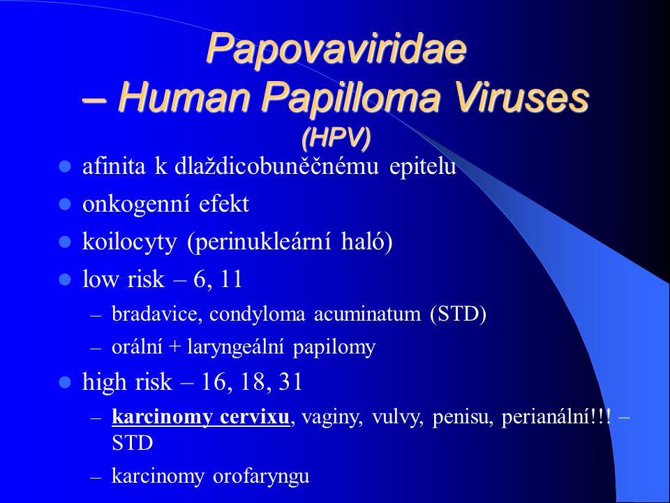 Papovaviridae – Human Papilloma Viruses (HPV) afinita k dlaždicobuněčnému epitelu onkogenní efekt koilocyty (perinukleární haló) low risk – 6, 11 – bradavice, condyloma acuminatum (STD) – orální + laryngeální papilomy high risk – 16, 18, 31 – karcinomy cervixu, vaginy, vulvy, penisu, perianální!!.