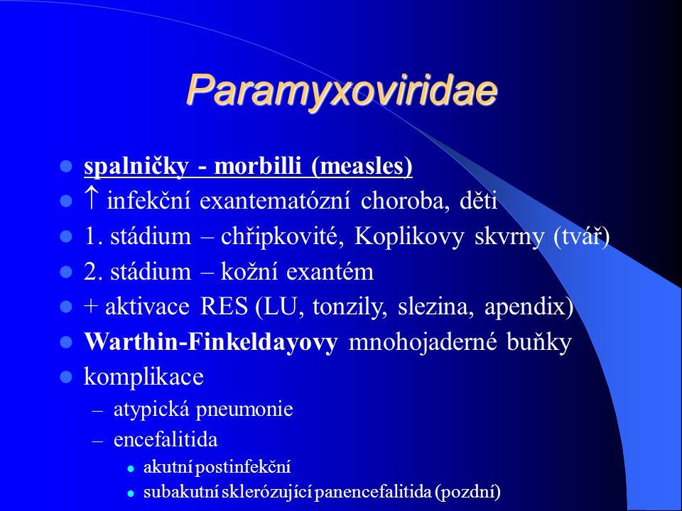 Paramyxoviridae spalničky - morbilli (measles)  infekční exantematózní choroba, děti 1.