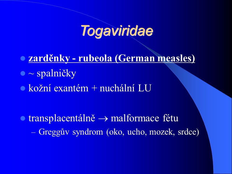 Togaviridae zarděnky - rubeola (German measles) ~ spalničky kožní exantém + nuchální LU transplacentálně  malformace fétu – Greggův syndrom (oko, ucho, mozek, srdce)