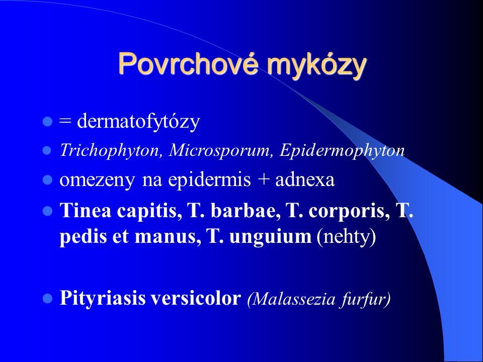 Povrchové mykózy = dermatofytózy Trichophyton, Microsporum, Epidermophyton omezeny na epidermis + adnexa Tinea capitis, T.