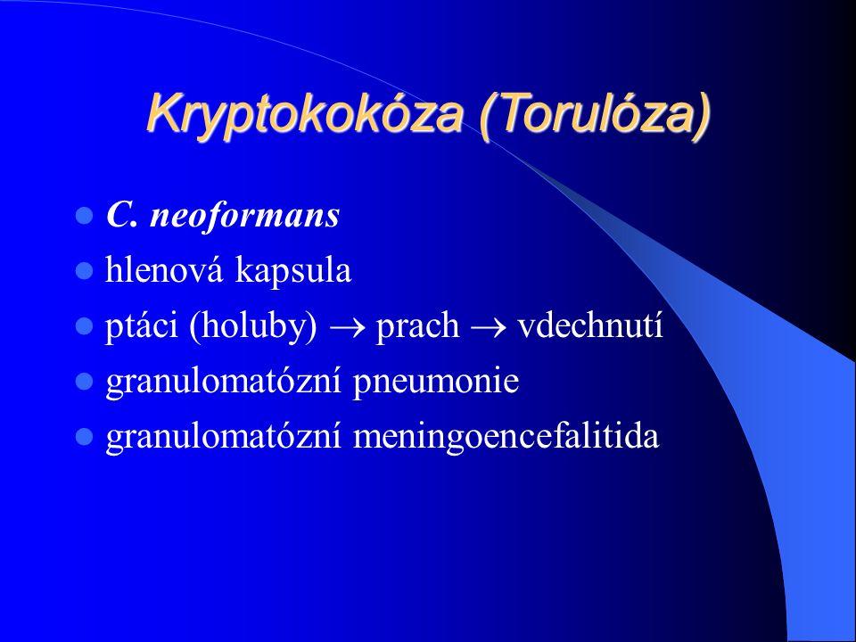 Kryptokokóza (Torulóza) C.