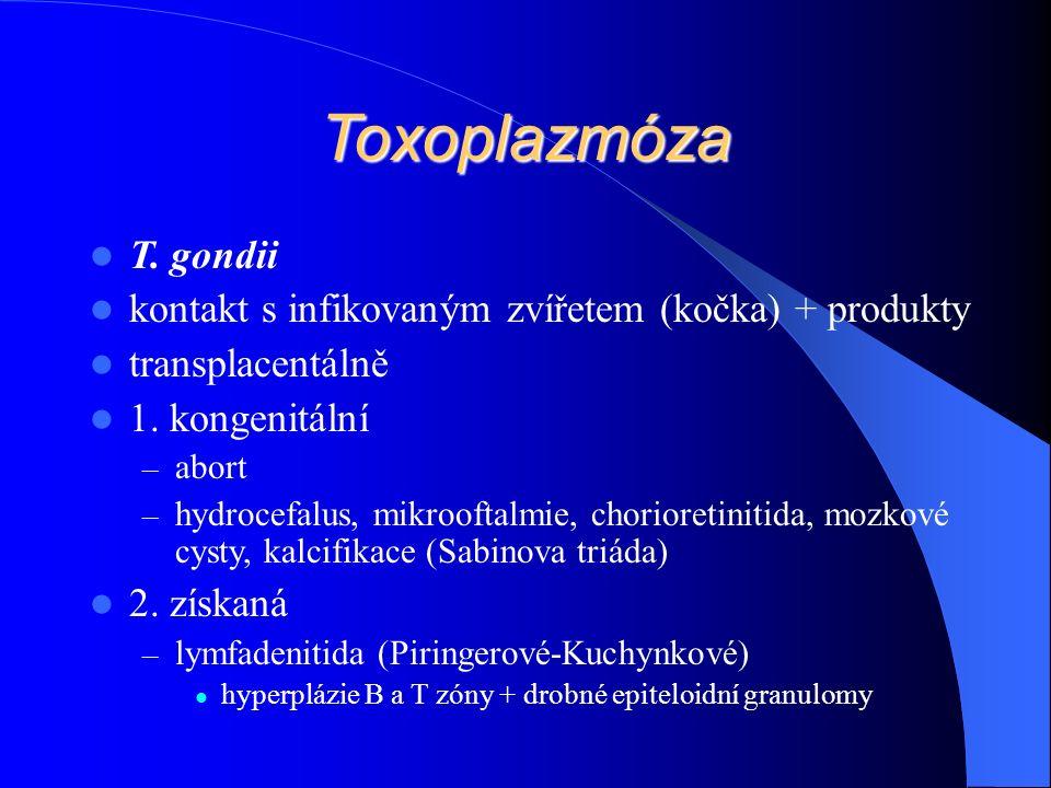 Toxoplazmóza T. gondii kontakt s infikovaným zvířetem (kočka) + produkty transplacentálně 1.