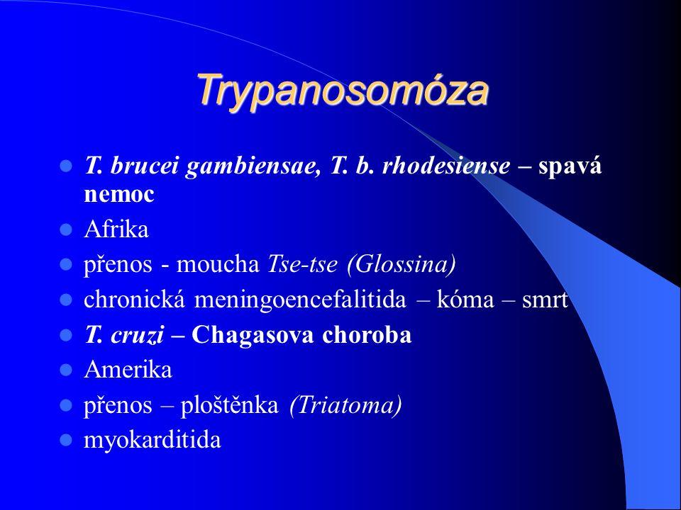 Trypanosomóza T. brucei gambiensae, T. b.