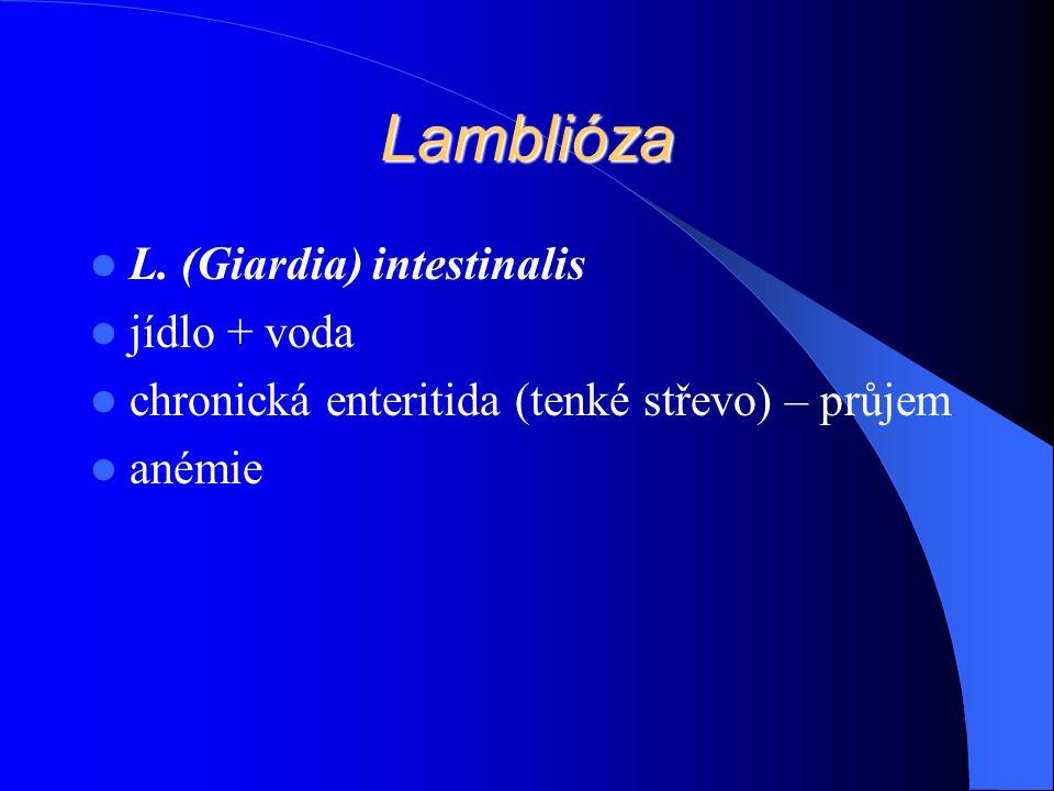Lamblióza L.