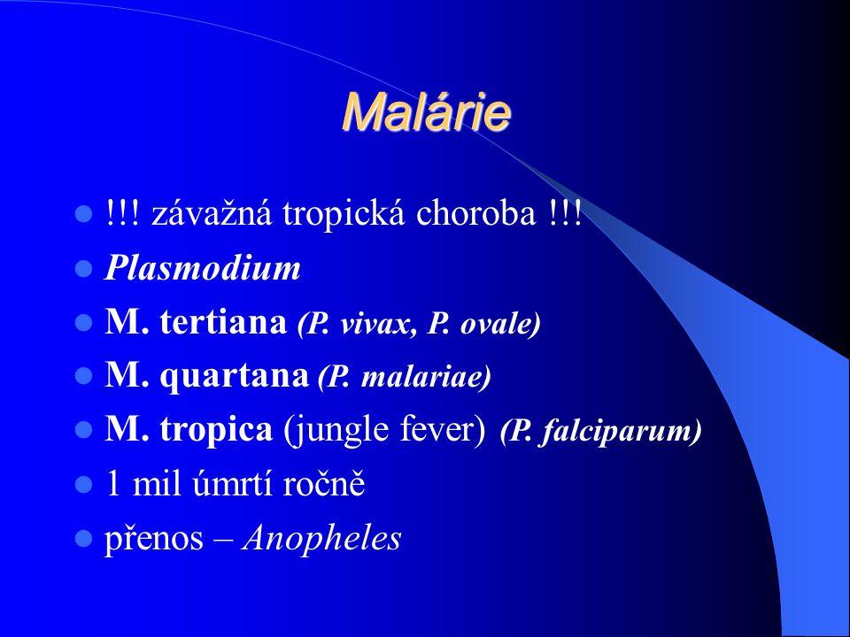 Malárie !!. závažná tropická choroba !!. Plasmodium M.