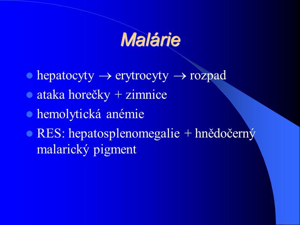 Malárie hepatocyty  erytrocyty  rozpad ataka horečky + zimnice hemolytická anémie RES: hepatosplenomegalie + hnědočerný malarický pigment